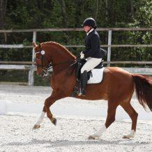 hestevet-lene-olsenimg_6812