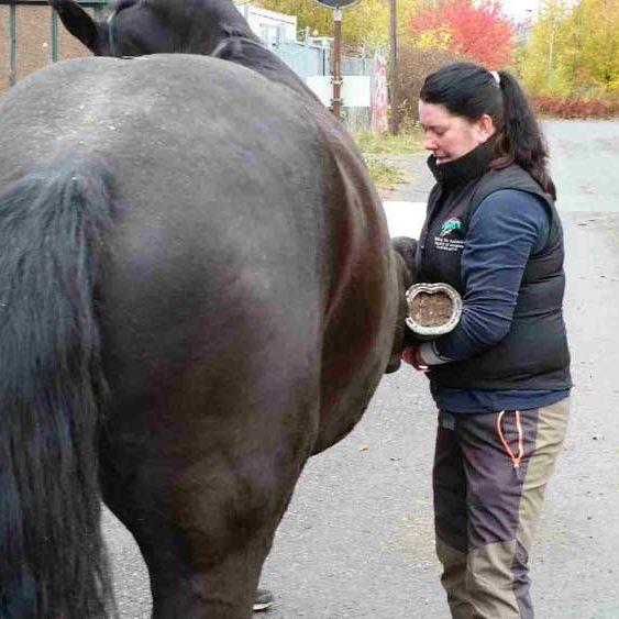 hestevet-kiropraktik