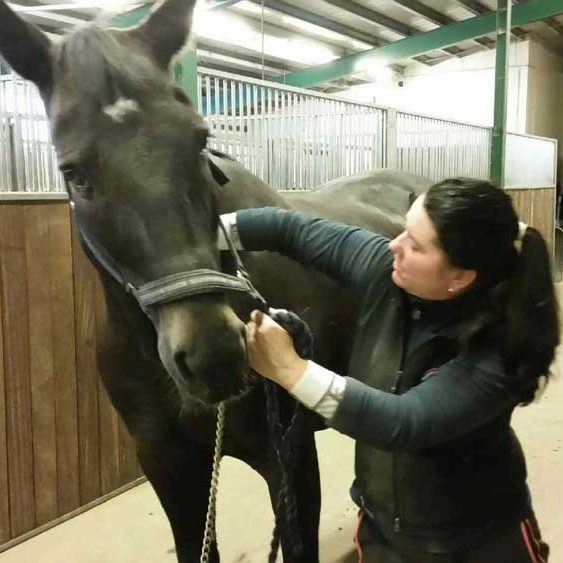 hestevet-kiropraktik2